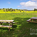 Picnic tables Poster by Carlos Caetano