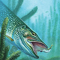 Pike and Jig Poster by JQ Licensing