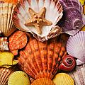 Pile of seashells Print by Garry Gay
