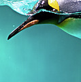 Pinguin Poster by www.photo-chick.com