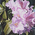 Pink Rhododendron Poster by Sharon Freeman