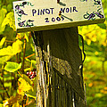 Pinot  03 Poster by James Rowland