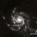 Pinwheel Galaxy, M101 Print by Science Source