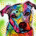 Pity Pitbull Print by Dean Russo
