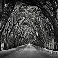 Plantation Oak Alley Poster by Perry Webster