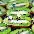 Planting rice on kiwifruit Poster by Paul Ge
