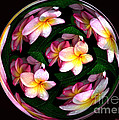 Plumeria Tile Ball Poster by Cheryl Young