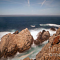 point lobos number one Print by Catherine Lau