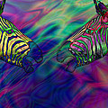 Polychromatic Zebras Poster by Anthony Caruso