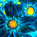 Pop Art Daisies 7 Poster by Amy Vangsgard