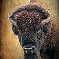 Portrait of a Buffalo Poster by Tamyra Ayles