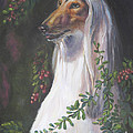 Portrait of a Domino Afghan Hound Poster by Gayle Rene
