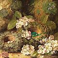 Primroses and Bird's Nests on a Mossy Bank Poster by Oliver Clare