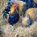 Prized Rooster Poster by Hanne Lore Koehler