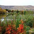 Prosser Autumn River with Hills Poster by Carol Groenen
