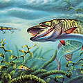 Provoked Musky Print by Jon Q Wright