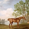 Pumpkin with a Stable-Lad Poster by George Stubbs