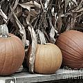 Pumpkins For Sale Poster by Smilin Eyes  Treasures