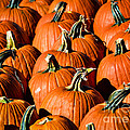 Pumpkins Galore Print by Julie Palencia