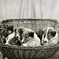 Puppies of the Past Poster by Marilyn Hunt