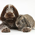 Puppy And Rabbt Poster by Mark Taylor