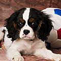 Puppy with ball Print by Garry Gay