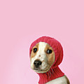 Puppy With Hat Poster by retales botijero