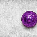 Purple Ball Cat Toy Poster by Andee Design