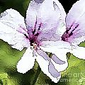 Purple Geranium Print by Artist and Photographer Laura Wrede
