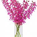 purple orchid in vase Poster by ATIKETTA SANGASAENG