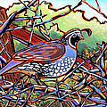 Quail Print by Nadi Spencer