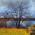 Quarry Lakes in Fremont California . 7D12636 Print by Wingsdomain Art and Photography