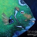 Queen Angelfish Print by Barbara Teller
