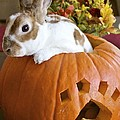 Rabbit Joins the Harvest Poster by Alanna Dumonceaux