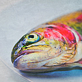 Rainbow Trout On Plate Poster by Image by Catherine MacBride