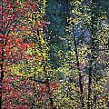 Red and Yellow Leaves Abstract Vertical Number 2 Print by Heather Kirk