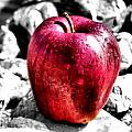 Red Apple Poster by Karen M Scovill