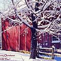 Red Barn in the Winter Connecticut USA Print by Sabine Jacobs