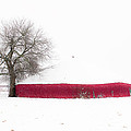 Red Barn in Winter Poster by Tamyra Ayles