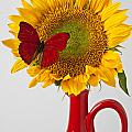 Red butterfly on sunflower on red pitcher Poster by Garry Gay