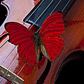 Red Butterfly On Violin Poster by Garry Gay