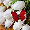 Red butterfly on white tulips Poster by Garry Gay