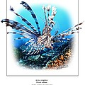 RED LIONFISH Print by Owen Bell
