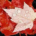 Red Maple Leaves Poster by Mike Grandmailson
