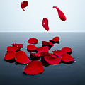 Red Rose Petals Falling Into A Pool Of Water Print by Chris Stein