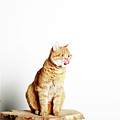 Red Tomcat Sitting On Wooden Table Poster by MarcelTB