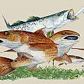 Reds and Trout Poster by KEVIN BRANT