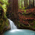 Redwood forest waterfall Poster by Matt Tilghman