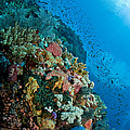 Reef Scene With Corals And Fish Poster by Mathieu Meur