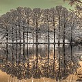 Reflections Print by Jane Linders